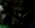 Download video bokep Cewek Jilbab Di Paksa Ngentot Dalam Hutan